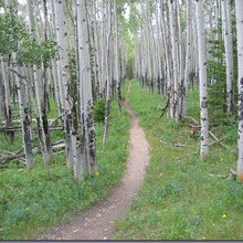 Colo Trail near Chalk Creek, photo by Stefan Griebel
